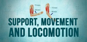 Support movement and locomotion