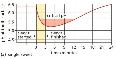 pH in the mouth falls (i.e. becomes more acid) when a single sweet is sucked